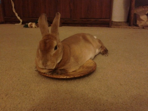 Rabbit on plate